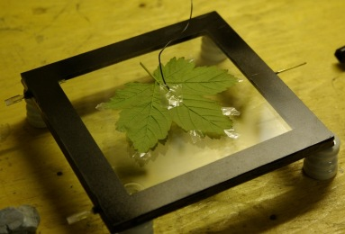 Kirlian Photo Place Sticking Leaf
